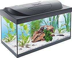 Aquarium kaufen: Ratgeber und Infos - aquariumkaufen24